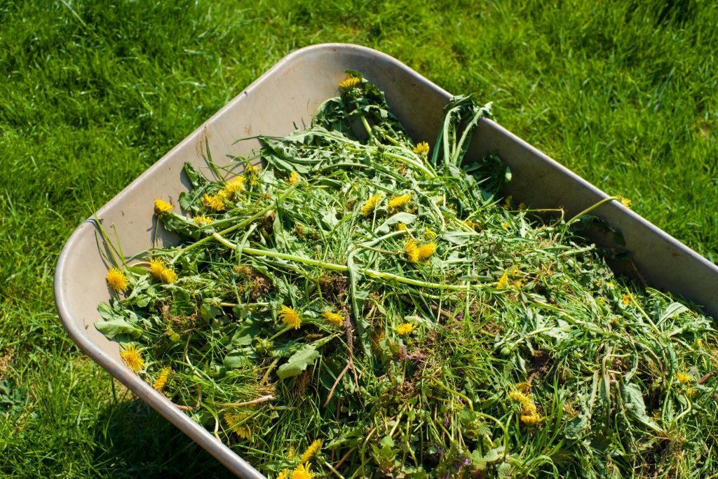 wild flowers and grass collected